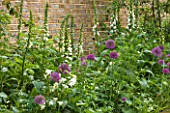 DESIGNER BUTTER WAKEFIELD  LONDON: SMALL CITY GARDEN WITH BORDER PLANTED WITH ALLIUM PURPLE SENSATION AND DIGITALIS PURPUREA ALBIFLORA