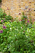 DESIGNER BUTTER WAKEFIELD  LONDON: SMALL CITY GARDEN WITH LAWN AND BORDER PLANTED WITH ALLIUM PURPLE SENSATION  CIRSIUM RIVULARE ATROPURPUREUM AND AQUILEGIA WHITE STAR