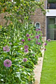 DESIGNER BUTTER WAKEFIELD  LONDON: SMALL CITY GARDEN WITH LAWN AND BORDER PLANTED WITH ALLIUM PURPLE SENSATION AND DIGITALIS PURPUREA ALBIFLORA