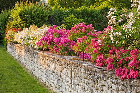 CHATEAU_DU_RIVAU__LOIRE_VALLEY__FRANCE_THE_ROSE_WALK_WITH__TOURAINE_TUFFEAU_LIMESTONE_WALLS__ROSES_M