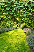 LES JARDINS DE ROQUELIN  LOIRE VALLEY  FRANCE: LAWN AND TUNNEL OF VITIS COIGNETIAE WITH NEPETA SIX HILLS GIANT
