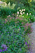 NYMANS  SUSSEX. THE NATIONAL TRUST: GERANIUMS  ASTRANTIA ROMA  AND POPPIES IN THE HERBACEOUS BORDER- EVENING LIGHT  JUNE