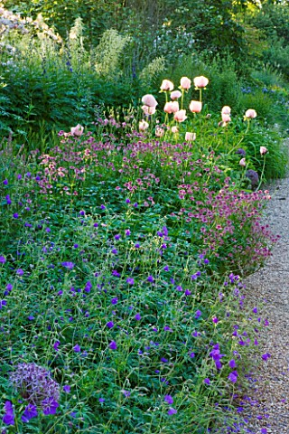 NYMANS__SUSSEX_THE_NATIONAL_TRUST_GERANIUMS__ASTRANTIA_ROMA__AND_POPPIES_IN_THE_HERBACEOUS_BORDER_EV