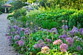 NYMANS  SUSSEX. THE NATIONAL TRUST : ALLIUM GIGANTEUM IN THE HERBACEOUS BORDER  EVENING LIGHT  JUNE