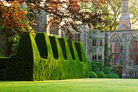 NYMANS__SUSSEX_THE_NATIONAL_TRUST__THE_HOUSE_WITH_TOPIARY_YEW_HEDGE_AND_COPPER_BEECH_TREE__MORNING_L
