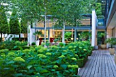 THE GLASS HOUSE  PETERSHAM. ARCHITECTS TERRY FARRELL PARTNERS. GARDEN DESIGN BY SALLIS CHANDLER: NIGHT VIEW OF GLASS PAVILION  CLIPPED BAY  DECKING AND HYDRANGEA ANNABELLE