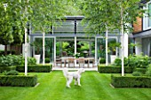 THE GLASS HOUSE  PETERSHAM. ARCHITECTS TERRY FARRELL PARTNERS. GARDEN DESIGN BY SALLIS CHANDLER: LAWN  GLASS PAVILION  BETULA UTILIS JACQUEMONTII AND OUTDOOR DINING  TABLE