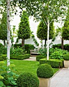 THE GLASS HOUSE  PETERSHAM. ARCHITECTS TERRY FARRELL PARTNERS. GARDEN DESIGN BY SALLIS CHANDLER: LAWN  CLIPPED BAY CONES  WOODEN BENCH  BETULA UTILIS VAR JACQUEMONTII