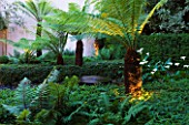THE GLASS HOUSE  PETERSHAM. ARCHITECTS TERRY FARRELL PARTNERS. GARDEN DESIGN BY SALLIS CHANDLER: TREE FERNS BESIDE BLACK PEBBLE POOL AND FOUNTAIN  LIT UP AT NIGHT