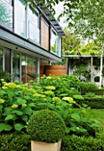 THE GLASS HOUSE  PETERSHAM. ARCHITECTS TERRY FARRELL PARTNERS. GARDEN DESIGN BY SALLIS CHANDLER: LAWN  BEDS OF HYDRANGEA ANNABELLE AND THE HOUSE
