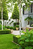 THE GLASS HOUSE  PETERSHAM. ARCHITECTS TERRY FARRELL PARTNERS. GARDEN DESIGN BY SALLIS CHANDLER: LAWN  BOX EDGED BEDS  HYDRANGEA ANNABELLE  BETULA JACQUEMONTII