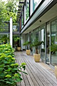 THE GLASS HOUSE  PETERSHAM. ARCHITECTS TERRY FARRELL PARTNERS. GARDEN DESIGN BY SALLIS CHANDLER: DECKING BESIDE HOUSE WITH CONTAINERS AND HYDRANGEA ANNABELLE