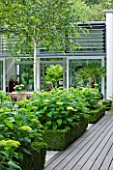 THE GLASS HOUSE  PETERSHAM. ARCHITECTS TERRY FARRELL PARTNERS. GARDEN DESIGN BY SALLIS CHANDLER: VIEW TO GLASS PAVILION WITH DECKING  BOX AND HYDRANGEA ANNABELLE
