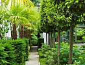 THE GLASS HOUSE  PETERSHAM. ARCHITECTS TERRY FARRELL PARTNERS. GARDEN DESIGN BY SALLIS CHANDLER: PATH WITH CLIPPED BAYS  YES AND TRACHYCARPUS FORTUNEI