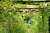 OLD THATCH  BERKSHIRE: ROSE AND CLEMATIS PERGOLA WITH ROSA FILIPES KIFTSGATE  ROSA AMERICAN PILLAR AND CLEMATIS MADAME JULIA CORREVON