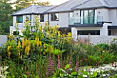 DEW POND HOUSE. DESIGN BY WILSON MCWILLIAM STUDIO - PERSICARIA POLYMORPHA  PERSICARIA  ATROSANGUINEUM  LYTHRUM DROPMORE PURPLE  LIGULARIA WILSONIANA  INULA SONNENSPEER