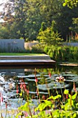 DEW POND HOUSE: DESIGN BY WILSON MCWILLIAM STUDIO - VIEW ACROSS MAIN POND TO TERRACE  DECK AND RENDERED WALLS. PERSICARIA AMPLEXICAULIS ATROSANGUINEUM