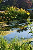DEW POND HOUSE: DESIGN BY WILSON MCWILLIAM STUDIO - POND WITH EQUISETUM HYEMALE  SCHOENOPLECTUS LACUSTRIS SUBSP TABERNAEMONTANI  INULA RACEMOSA SONNENSPEER  LIGULARIA