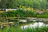 DEW POND HOUSE: DESIGN BY WILSON MCWILLIAM STUDIO - POND WITH SCHOENOPLECTUS LACUSTRIS SUBSP TABERNAEMONTANI  INULA RACEMOSA SONNENSPEER  LIGULARIA WILSONIANA  PETASITES