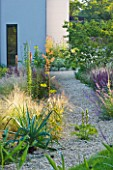 DEW POND HOUSE: DESIGN BY WILSON MCWILLIAM STUDIO - GRAVEL GARDEN- KNIPHOFIA CAULESCENS  MACLEAYA SPETCHLEY RUBY  STIPA TENUISSIMA  ACANTHUS SPINOSUS  EREMURUS CLEOPATRA