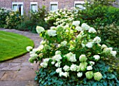 WORCESTER COLLEGE  OXFORD: THE CASSON BUILDING WITH HYDRANGEA ANNABELLE  HYDRANGEA PANICULATA LIMELIGHT AND ANEMONE X HYBRIDA  HONORINE JOBERT