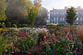 RAGLEY HALL GARDEN  WARWICKSHIRE: THE ROSE GARDEN IN AUTUMN: ROSE GORDONS COLLAGE AND ANEMONE X HYBRIDA ANDREA ATKINSON WITH HALL IN BACKGROUND. MIST