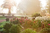 RAGLEY HALL GARDEN  WARWICKSHIRE: THE ROSE GARDEN IN AUTUMN: ROSE GORDONS COLLAGE AND ANEMONE X HYBRIDA ANDREA ATKINSON . MORNING LIGHT. MIST