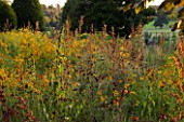 RAGLEY HALL GARDEN  WARWICKSHIRE: PICTORIAL MEADOWS VOLCANO MIXTURE IN AUTUMN - RED FLAX  RED ORACHE AND COREOPSIS
