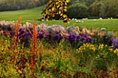 RAGLEY HALL GARDEN  WARWICKSHIRE: PICTORIAL MEADOWS VOLCANO MIXTURE IN AUTUMN - RED FLAX  RED ORACHE AND COREOPSIS. BEHIND IS ASTER PRAIRIE PURPLE AND ASTER VESTA