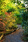 THE PICTON GARDEN  WORCESTERSHIRE: PATH THROUGH WOODLAND WITH ACER JAPONICUM ACONITIFOLIUM ON THE LEFT