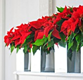 THE URBAN FLOWER FIRM (TUFF) : WHITE AND RED CHRISTMAS - MIRRORED CONTAINERS WITH POINSETTIA CHRISTMAS FEELINGS RED   ON MANTELPIECE