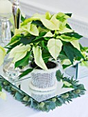 DESIGNER IAN LLOYD - CHRISTMAS TABLE SETTING IN WHITE AND LIME GREEN  WITH CANDLES AND POINSETTIA CHRISTMAS FEELINGS WHITE IN CONTAINER