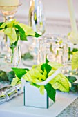 DESIGNER IAN LLOYD - CHRISTMAS TABLE SETTING IN WHITE AND LIME GREEN  WITH CANDLES AND POINSETTIA CHRISTMAS FEELINGS WHITE IN MIRRORED CONTAINER