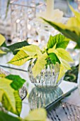 DESIGNER IAN LLOYD - CHRISTMAS TABLE SETTING IN WHITE AND LIME GREEN  WITH CANDLES AND POINSETTIA CHRISTMAS FEELINGS WHITE IN GLASS CONTAINER