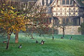HEVER CASTLE  KENT  AUTUMN: VIEW OF THE ASTOR WING WITH APPLE TREES IN ORCHARD AND MALLARD DUCKS