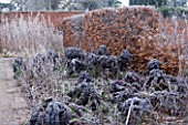 HAMPTON COURT CASTLE AND GARDENS  HEREFORDSHIRE: THE ORGANIC KITCHEN/ VEGETABLE GARDEN - ORNAMENTAL KALE IN FROST
