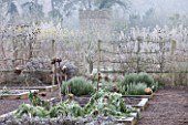 HAMPTON COURT CASTLE AND GARDENS  HEREFORDSHIRE: THE ORGANIC KITCHEN/ VEGETABLE GARDEN IN FROST WITH RAISED BEDS PLANTED WITH CARDOONS