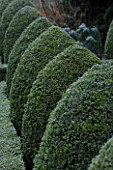 HAMPTON COURT CASTLE AND GARDENS  HEREFORDSHIRE: CLIPPED BOX TOPIART IN THE WALLED GARDEN  IN FROST