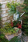 THE GARDEN AND PLANT COMPANY  HATHEROP  GLOUCESTERSHIRE: CHRISTMAS: MISTLETOE  FIR  HYDRANGEA HEADS  HOLLY  HOLLY BERRIES  IVY  ROSEMARY  SAGE AND LAUREL