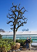 CROCUS NURSERY  SURREY: ARNE MAYNARD AND CO-DIRECTOR MARK FANE ADMIRE AN ANCIENT PEAR TREE FOR ARNE MAYNARD CHELSEA 2012 GARDEN