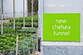 CROCUS NURSERY  SURREY: SIGN INTO POLYTUNNEL AND PLANTS GROWING IN CONTAINERS FOR ARNE MAYNARD CHELSEA 2012 GARDEN