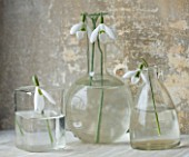 COTSWOLD FARM  GLOUCESTERSHIRE: SNOWDROPS IN GLASS JARS - LEFT TO RIGHT - GALANTHUS MARY BIDDULPH  GALANTHUS GALATEA AND GALANTHUS ROBIN HOOD