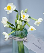 SCENTED NARCISSI (DAFFODILS) FROM SCILLY ISLANDS - NARCISSUS AVALANCHE IN A GLASS BOTTLE - STYLING BY JACKY HOBBS