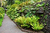 THE JARDIN DE ACLIMATACION DE LA OROTAVA  TENERIFE  CANARY ISLANDS: PATH THROUGH FERNERY WITH FERNS GROWING OUT OF A  VOLCANIC WALL