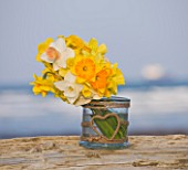 R.A.SCAMP  QUALITY DAFFODILS  CORNWALL: DAFFODILS IN A GLASS JAR BY THE SEASIDE NEAR FALMOUTH