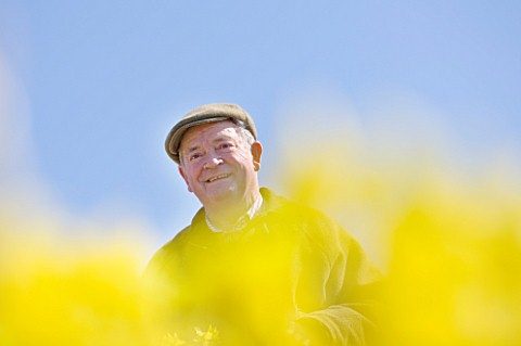 RASCAMP__QUALITY_DAFFODILS__CORNWALL_RON_SCAMP_IN_THE_BULB_FIELD_PICKING_NARCISSI