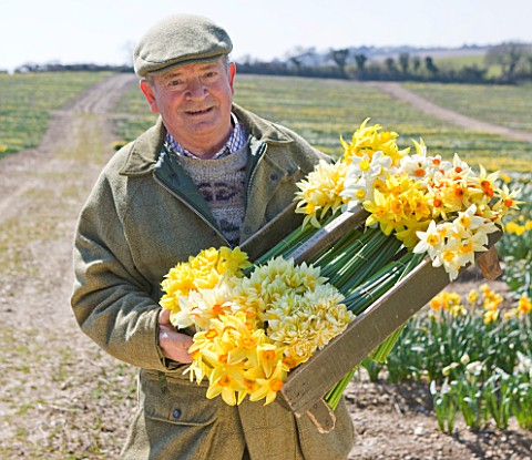 RASCAMP__QUALITY_DAFFODILS__CORNWALL_RON_SCAMP_IN_THE_BULB_FIELD_WITH_A_BOX_OF_HERITAGE_NARCISSI_DAF