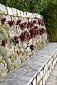 VILLA FORT FRANCE  GRASSE  FRANCE: AEONIUMS IN THE WALL BESIDE THE SWIMMING POOL