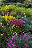 DESIGNER JAMES BASSON, SCAPE DESIGN, FRANCE: LOW MAINTENANCE GARDEN WITH PINKS AND ZOYSIA TENUIFOLIUM - PROVENCE, SUMMER, FLOWERS, FLOWERING, DROUGHT TOLERANT, DRY