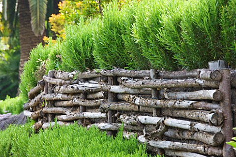 DESIGNER_JAMES_BASSON_SCAPE_DESIGN_FRANCE_LOW_WOODEN_WOVEN_FENCE_WITH_ROSEMARY__PROVENCE_HEDGE_HEDGI